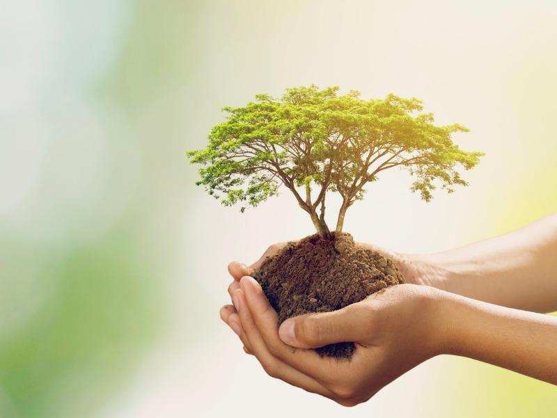 Deux mains en coupe tenant un peu de terre avec un arbre miniature dedans.